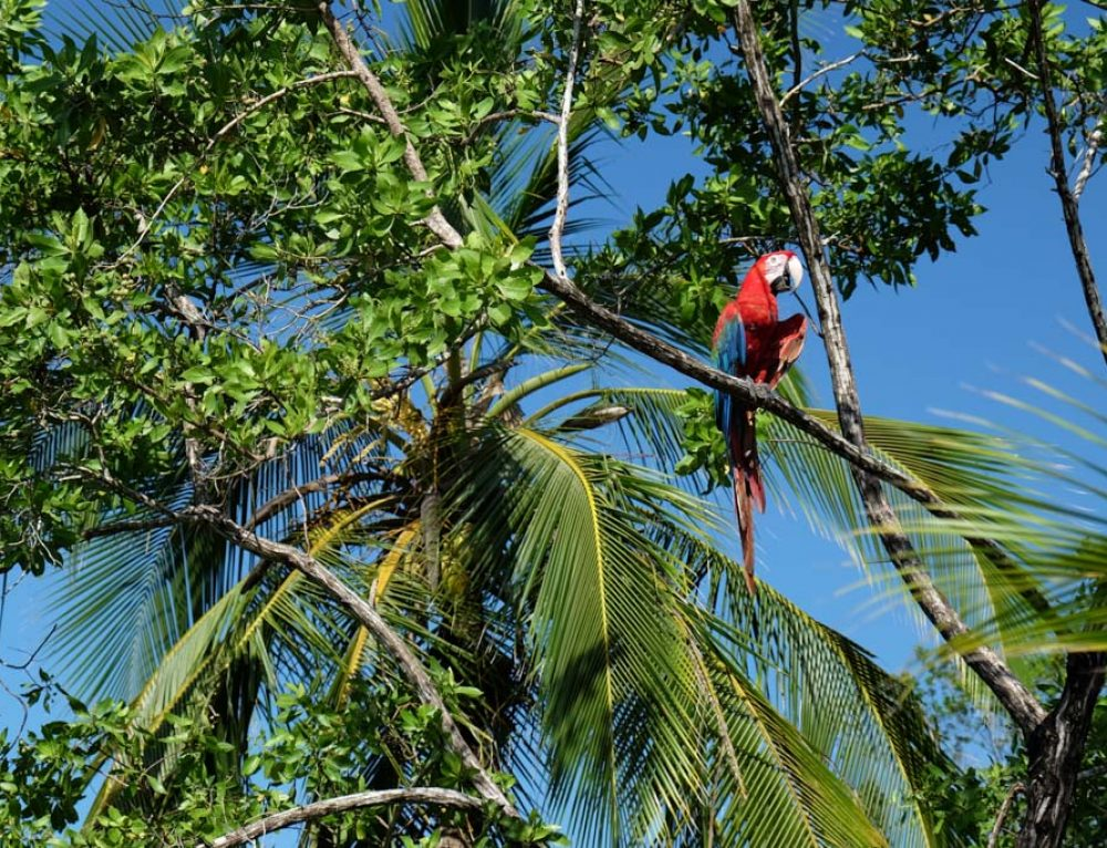 Surprizele din Bocas del Toro. Panama