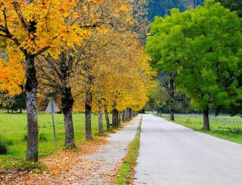 Achensee, Tirol. OPicăturădeToamnă
