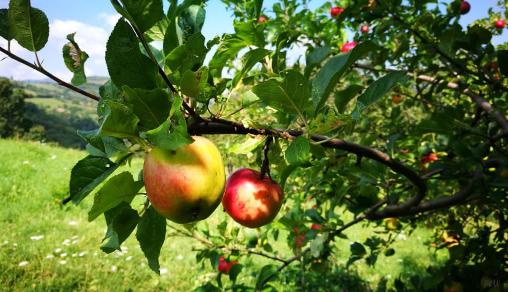 Poiana Mărului